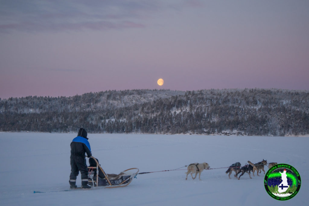 Husky adventure in the Lapland wilderness